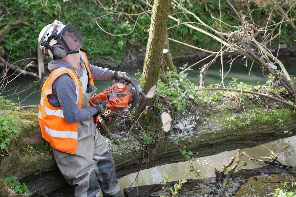 Contractor Mike Richards Chainsaws Part Of A Fallen Willow In The Mells River, To Help Create More Flood Capacity For Somerset Rivers Authority.