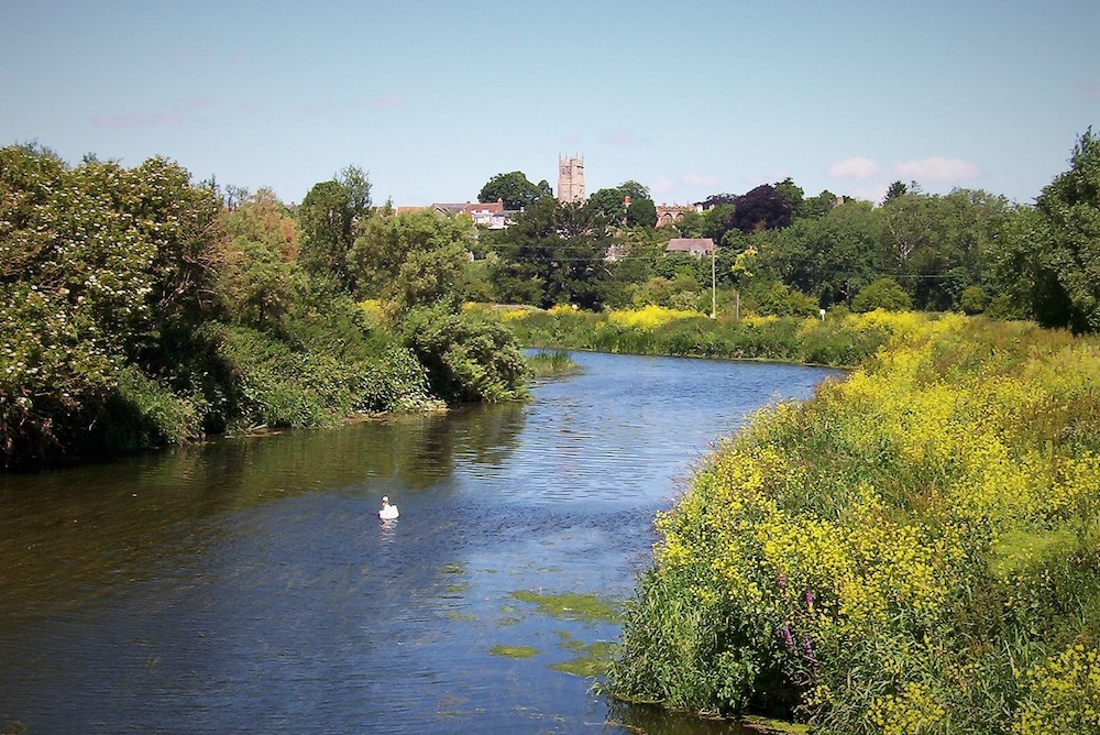 River Parrett In Summer With Swan Of Water And View Of Langport Including Church Tower