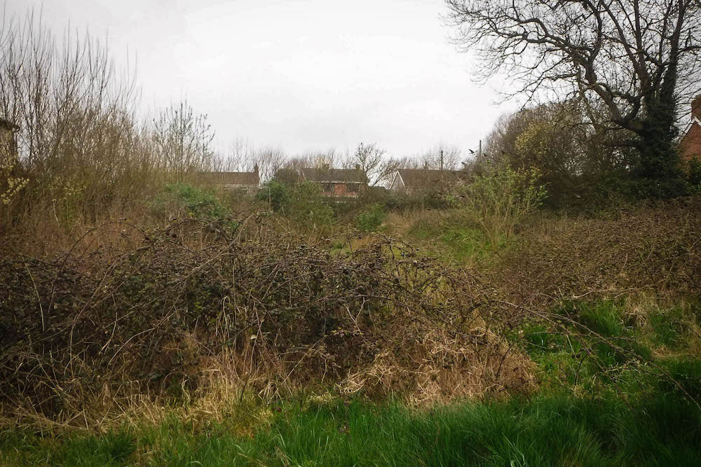 Large brambles and tall vegetation growing at SuDS basin near houses in East Huntspill