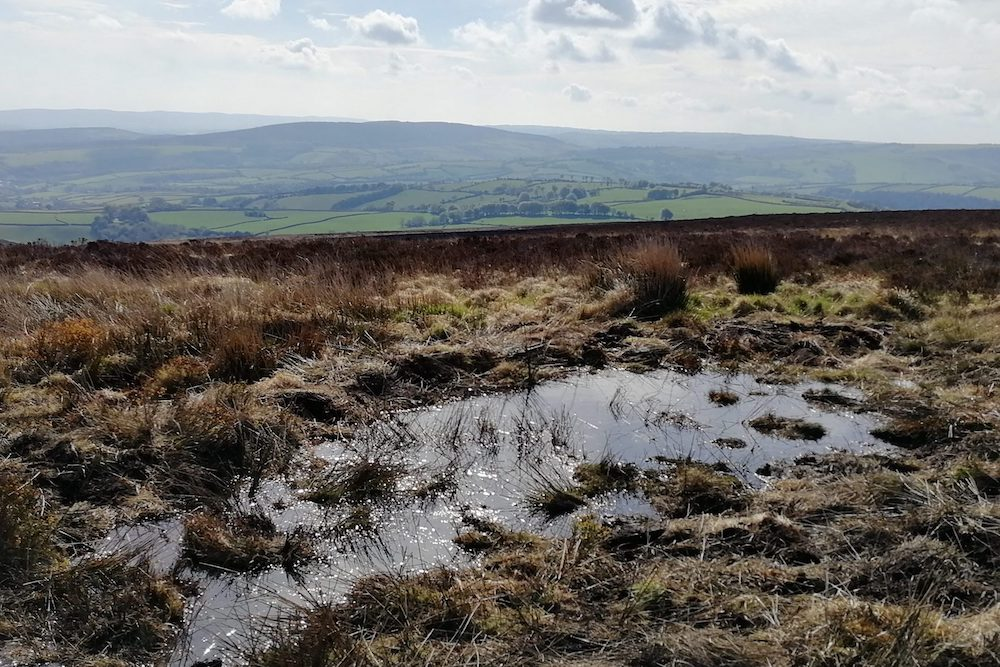 Water in swale created near Dunkery Beacon to slow the flow with view of Exmoor landscape beyond.