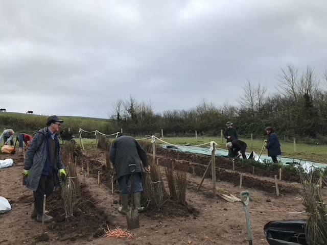 Seven people working on a series of trenches with some saplings temporarily heeled in for Trees for Water.