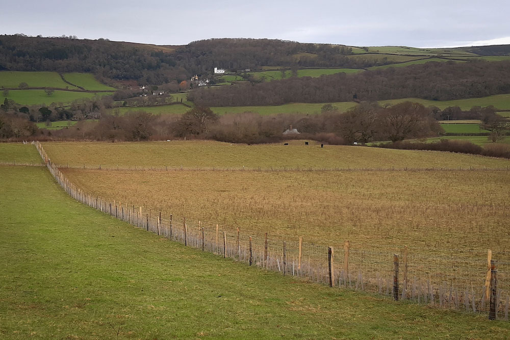 New hedgerow planted and fenced across a sloping field on Horner Farm, with the white landmark of Selworthy Church on the hillside in the distance.